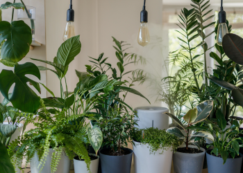 Best LED Grow Lights for Indoor Plants