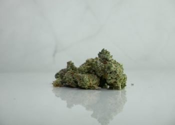 Best Strains for Pain and Fatigue
